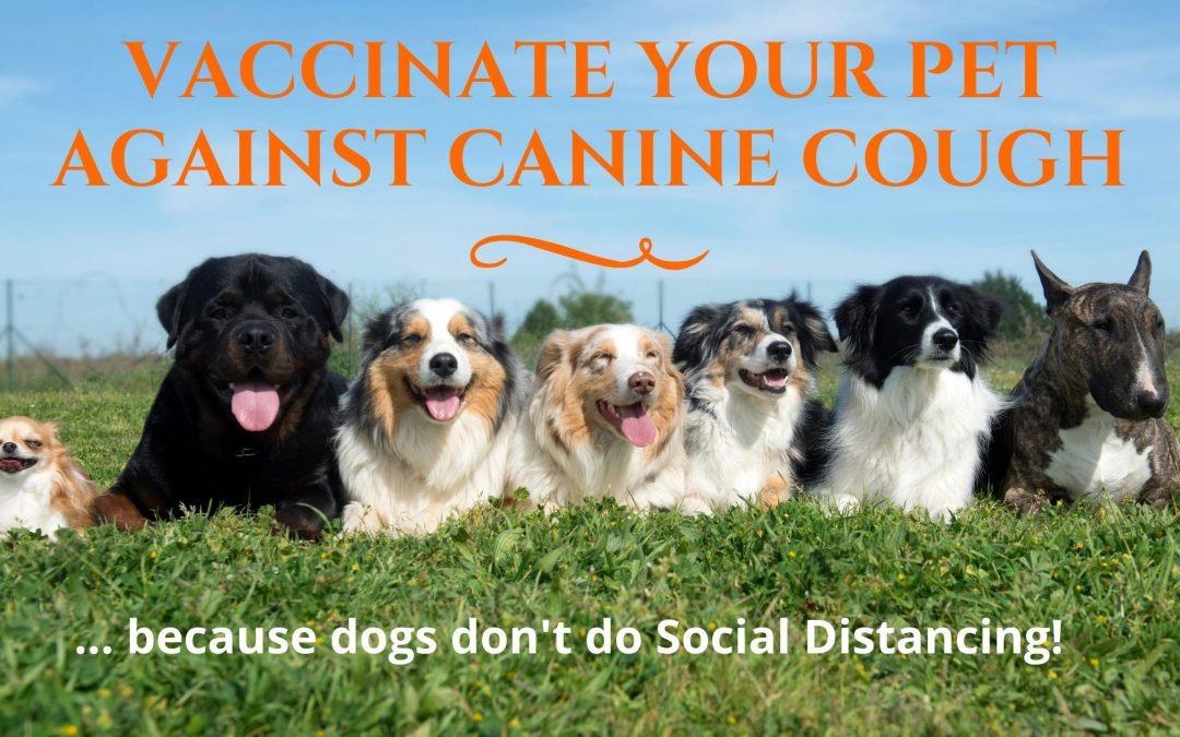 Vaccinate your Pet against Canine Cough
